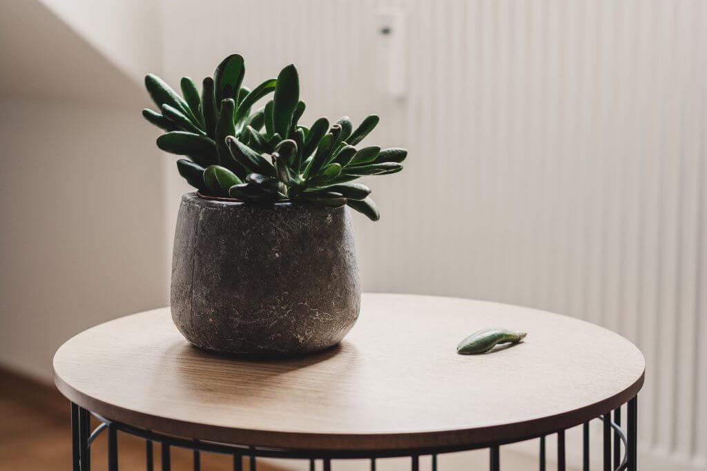 concrete plant pot succulent